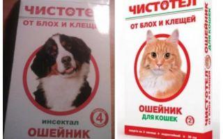 고양이와 개를위한 벼룩 celandine 칼라