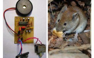 초음파 리 펠러 쥐 및 마우스