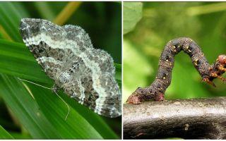 다양한 형태의 애벌레에 대한 설명, 이름 및 사진