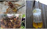 말벌과 말벌 용 수제 함정