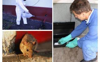 전문 서비스에 의한 쥐 및 쥐의 근절