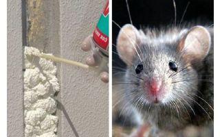 쥐가 거품을 먹는가?