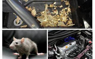 자동차에서 마우스를 얻는 법