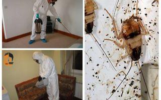 아파트 바퀴벌레 근절