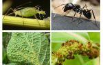 개미와 진딧물의 관계 유형