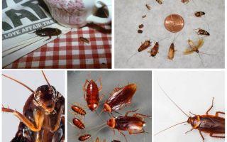 호스텔에서 바퀴벌레를 영구 제거하는 방법