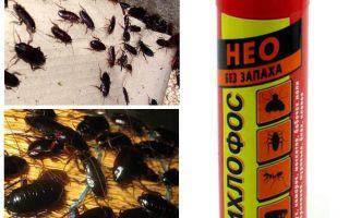 바퀴벌레의 dichlorvos가 독약에 도움이 되는가?