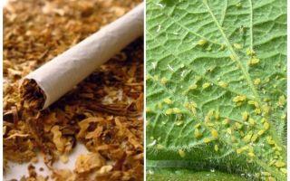 진딧물에 대한 담배