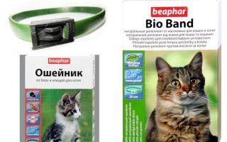고양이와 개를위한 벼룩에서의 칼라 Beafar
