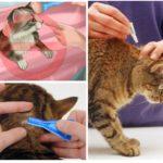 동물 치료 규칙