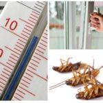바퀴벌레에 대한 냉기