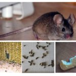 아파트에 쥐의 존재