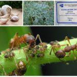 곤충과의 전쟁에서의 식물