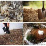 개미 제어 방법