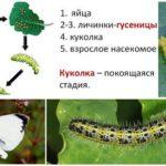 나비 사발 개발주기