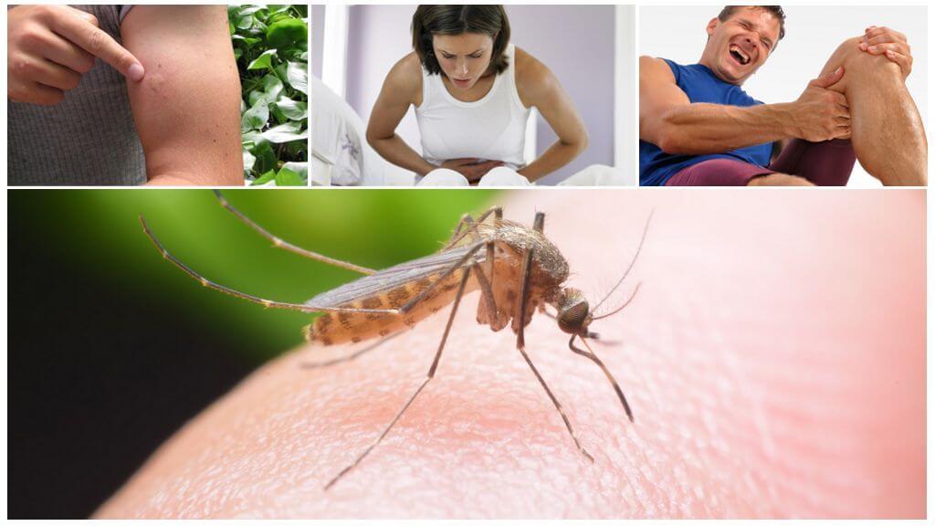 말라리아 모기 물린의 결과